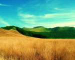 Obrázek - Letní barvy osetého pole
