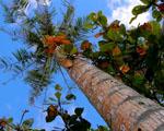 Obrázek - Opravdová láska lenošení pod palmou