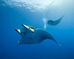 Obrázek - Svět pod hladinou oceánu