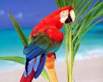 Obrázek - Last minute zájezd do tropů za barevným papouškem