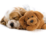 Obrázek - Spící štěně s plyšovou hračkou