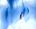 Obrázek - Uvězněný tučňák v modrém světě
