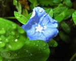 Obrázek - Skvost mezi květinami