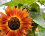 Obrázek - Krásná a barevná květina v detailu
