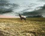 Obrázek - Černé mraky nad Afrikou
