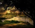 Obrázek - Pohádkový strom u jezera