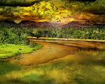 Obrázek - Pestrobarevný svět džungle