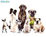 Obrázek - Dětský příběh Hotel pro psy