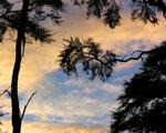 Obrázek - Západ slunce nad Bark Bay