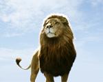 Obrázek - Hrdý lev král zvířat