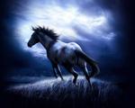 Obrázek - Běh tmavého koně
