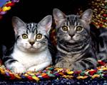 Obrázek - Domácí mazlíčci