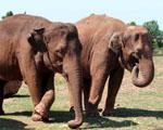 Obrázek - Sloní rodinka na pochodu