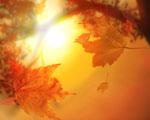 Obrázek - Oranžový pohled na podzim
