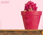 Obrázek - Miminko jako květina