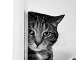 Obrázek - Kočička