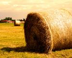 Obrázek - Farma