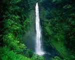 Obrázek - Dovolená na Havaji s vodopádem