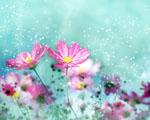 Obrázek - Jemná tapeta na PC plné květin
