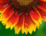 Obrázek - Šťavnatý květ v detailu