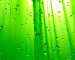 Obrázek - Světle zelený sprchový závěs