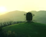 Obrázek - Zvláštní strom