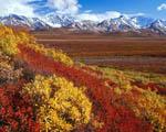 Obrázek - Podzim v Národním parku Denali na Aljašce