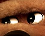 Obrázek - Medvědí oči