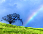 Obrázek - Strom s houpačkou a duhou