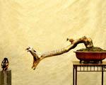 Obrázek - Ptáče a had