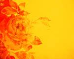 Obrázek na plochu - Růže
