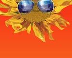Obrázek - Slunečnice