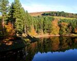 Obrázek - Zrcadlení podzimu na jezeře