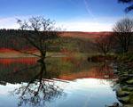 Obrázek - Poslední strom na jezeře