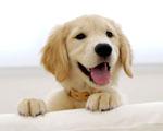 Obrázek - Usměvavý pejsek