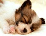 Obrázek - Nejkrásnější pohled na psa