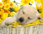 Obrázek - Voňavý spánek mezi květy
