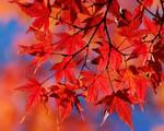 Obrázek - Podzimní paleta