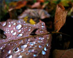 Obrázek - Podzimní drahokamy