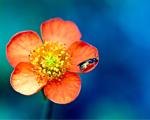 Obrázek - Usměvavá květina s příjemným pozadím