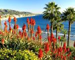 Obrázek - Laguna beach v Kalifornii
