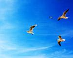Obrázek - Překrásné podnebí pro společný let racků