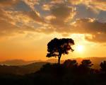 Obrázek - Zlaté slunce