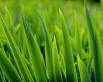 Obrázek - Čerstvá tráva