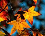 Obrázek - Překrásné barvy podzimu
