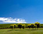 Obrázek - Léto mezi vinicemi