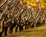 Obrázek - Podzim v sadech
