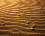Obrázek - Dovolená v Egyptě