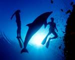 Obr�zek - Tanec s delf�nem