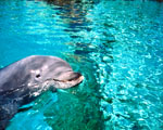 Obrázek - Delfín v bazénu